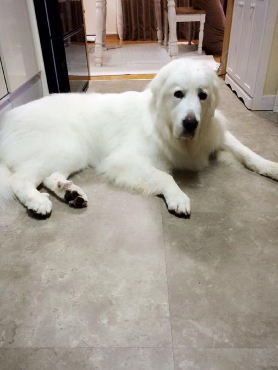 dog_003